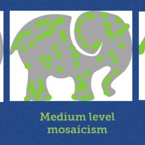 Medium Level Mosaicism