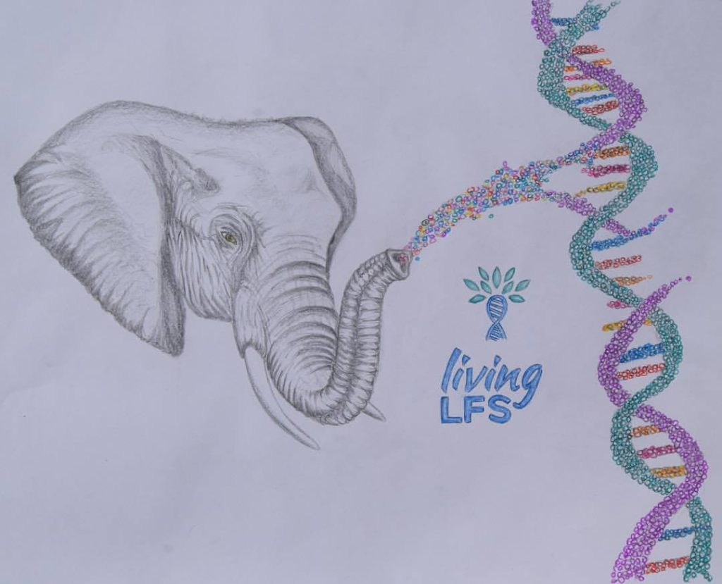 The African elephant has become a symbol of hope for our Living LFS community. The elephant turns out to be almost unbeatable when it comes to cancer. Drawing made by Ilonka Dee.